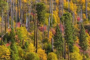 uitzicht op Yosemite National Park in de herfst foto
