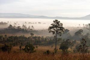 mistige ochtendzonsopgang in berg bij thung salang luang foto