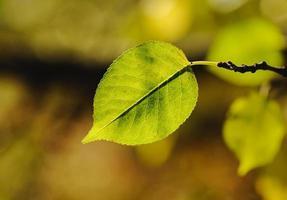 groene verlof achtergrond foto