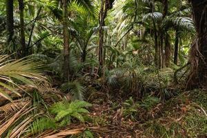 palmbomen groeien in tropisch regenwoud foto