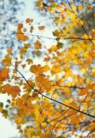 gele herfstbladeren aan een boom