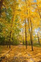 herfst esdoorn park met gele bladeren