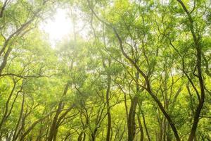 groene bladeren en zon foto