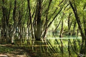 eikenbos weerspiegeld in het heldere water van een meer foto