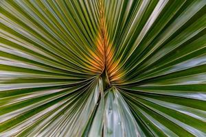groen palmblad als achtergrond foto