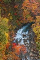 kleurrijke bladeren in geul matsukawa