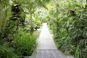 groene tuin foto
