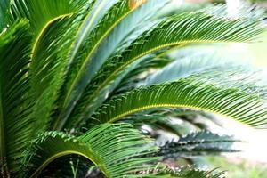 groene palm foto