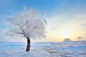 bevroren boom op winterveld foto