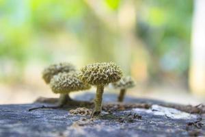 wilde paddenstoel foto