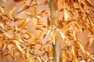 herfst gele bladeren