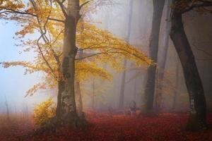 gele boom in de mist