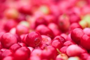 llingonberry achtergrond foto