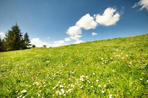 groene bloemenweiden in de Karpaten foto