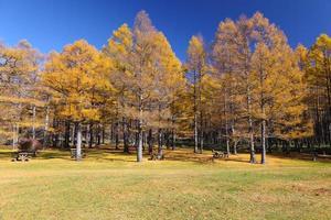 herfstbladeren met blauwe hemel foto