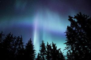 alaskan aurora met bomen foto