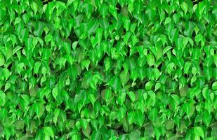 naadloze groene bladeren achtergrond foto