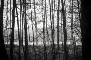 Kerstmisachtergrond van besneeuwd bos, berijpte boomtoppen op hemel.