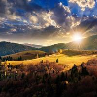 pijnbomen in de buurt van vallei in bergen op heuvel onder hemel foto