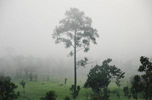 landschap met wolken en mist over heuvels bedekt met bossen