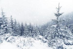 vuren boom mistig bos vallende sneeuw in winterlandschap.