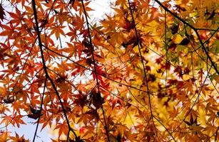 heldere herfstbladeren in de natuurlijke omgeving foto