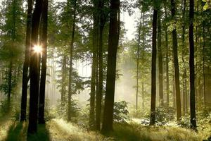 een mistige lentemorgen in de diepte van een bos