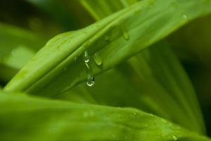 nadat regen water op bladeren valt foto