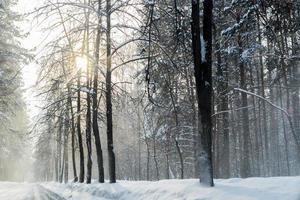 winter in het bos met sneeuwstof op de wegen