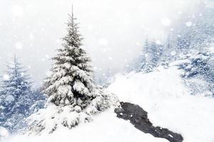 vuren boom mistig bos vallende sneeuw in winterlandschap. foto