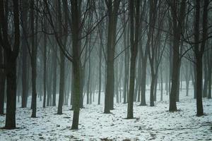 winternacht in het park. foto