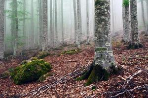 herfst in het park van de berg Amiata, Toscane foto