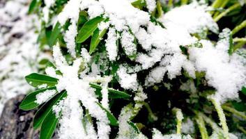 plant en sneeuw