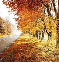 herfst. vallen. herfst park. herfst bomen en bladeren foto