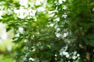 groene bokeh achtergrond foto