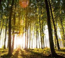 natuur. prachtige zonsondergang in het bos foto