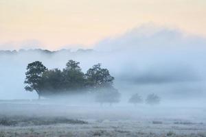 mooie dikke mist zonsopgang herfst herfst platteland landschap wi