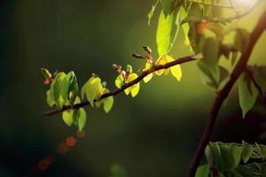 groene bladeren met zonnestraal foto