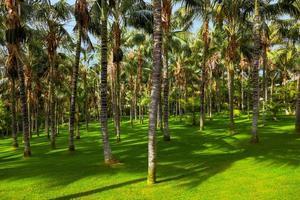 palmen op Tenerife - Canarische eilanden foto