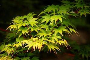 groene bladeren, ondiepe focus foto