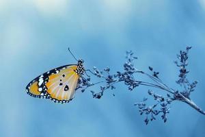 vintage vlinder en bloem in het voorjaar foto