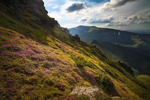 magische roze rododendronbloemen in de bergen foto