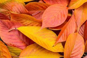 rode herfstbladeren achtergrond in de herfst foto