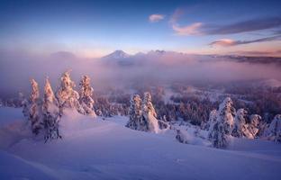 bevroren mistige ochtend foto