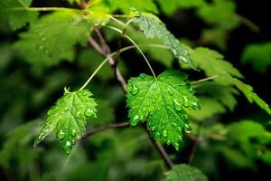 waterdruppels op groene bladeren