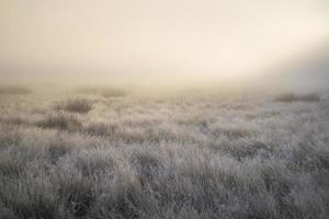 prachtige zonnestralen verlichten de mist van de herfst en vallen
