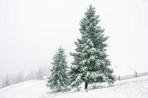 prachtige winterlandschap met besneeuwde bomen