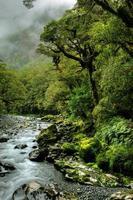 weelderig regenwoud foto