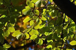 herfst bladeren vallen foto