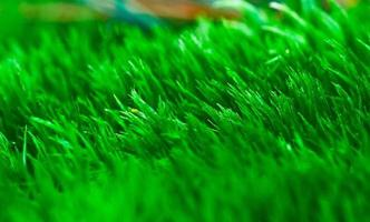 close up van mos